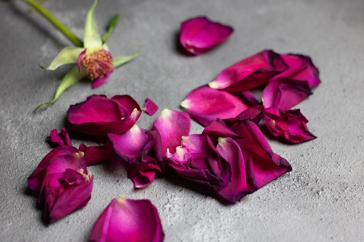 A pink flower with its petals removed