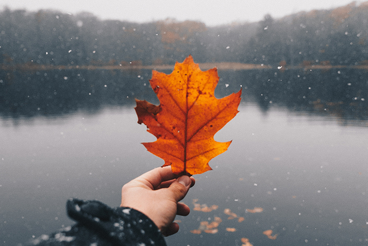 A person holding a fall leaf next to a body of water