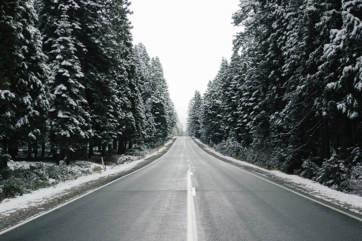 A road lined with snow-covered trees