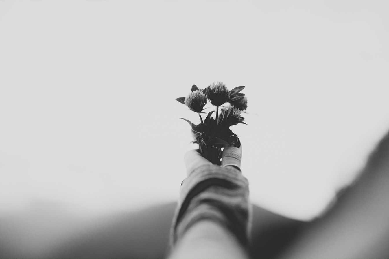 An outstretched hand holding flowers in black and white