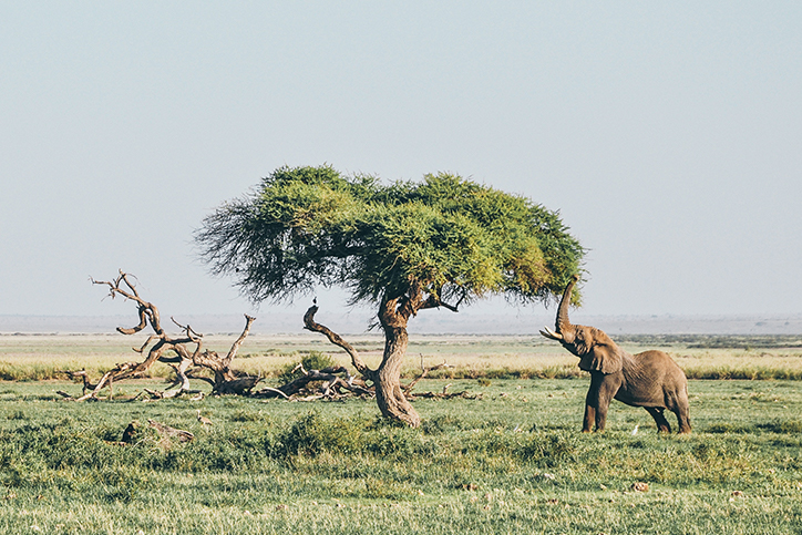 elephant by tree