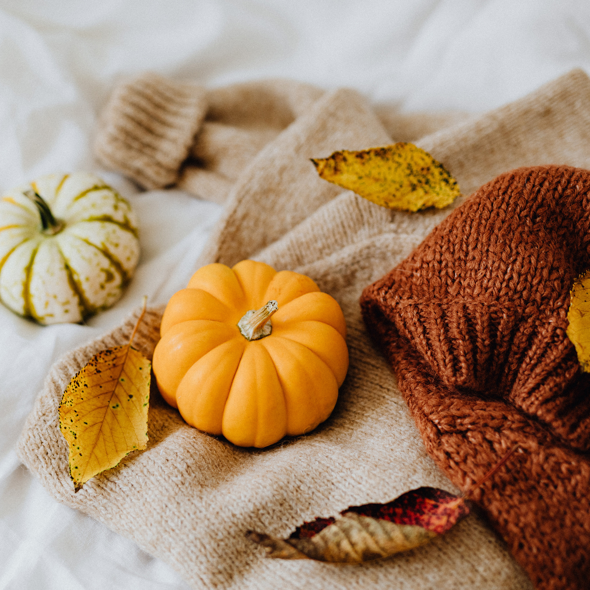 fall pumpkins and leaves on a blanket