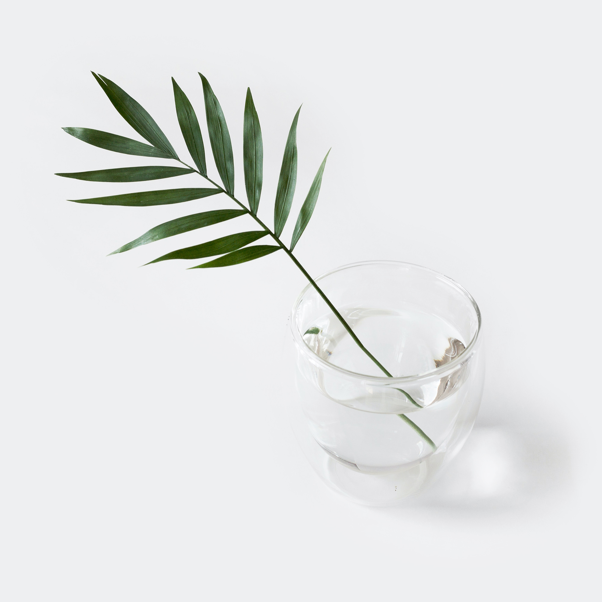 A plant in a glass of water